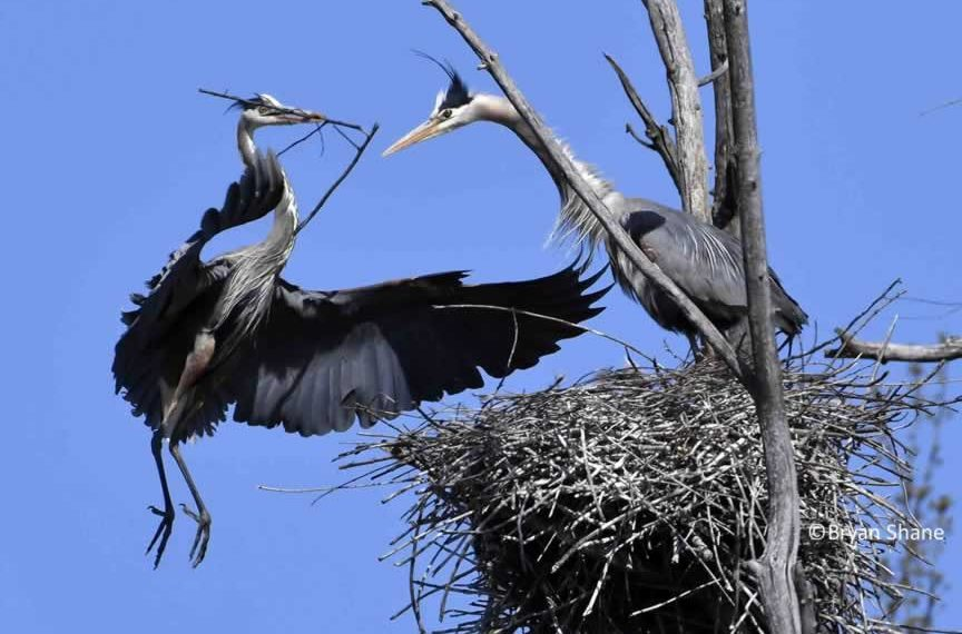 Wise-Decision-Making-by-Design-BPC-Nest-Building photo