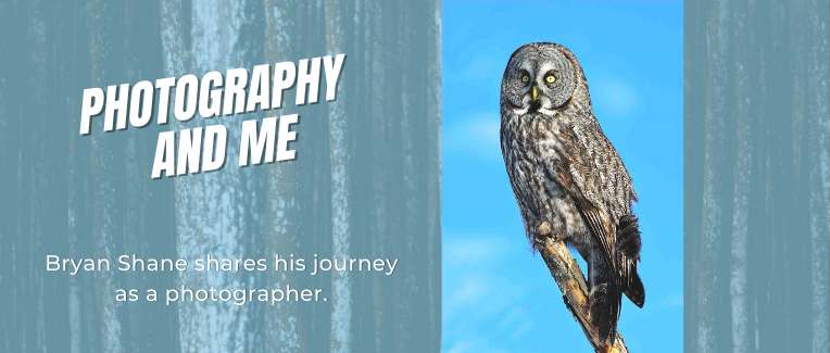 Photography and Me bryan Shane photo of Great grey owl